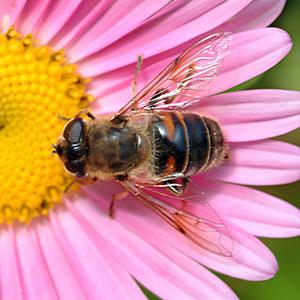 Pszczoły zamiast tabletek