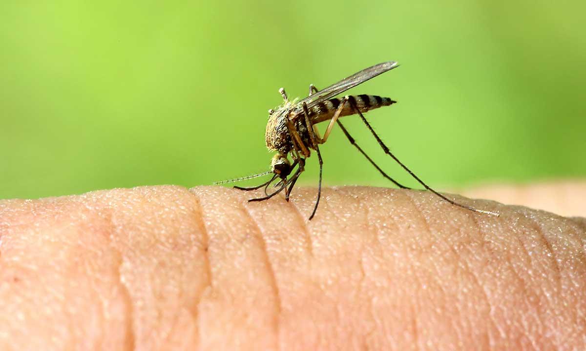 Na komary #ZajerzystyKraków!