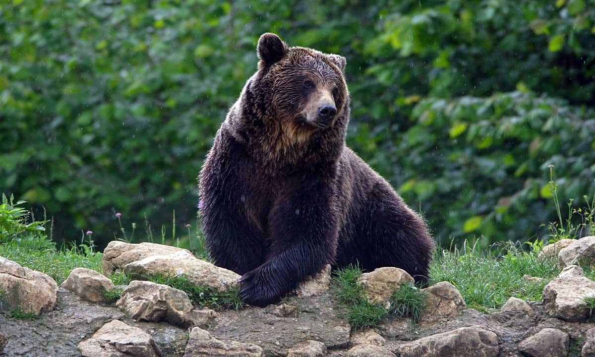 W Tatrach zamknięta dolina Strążyska a na Słowacji groźne niedźwiedzie