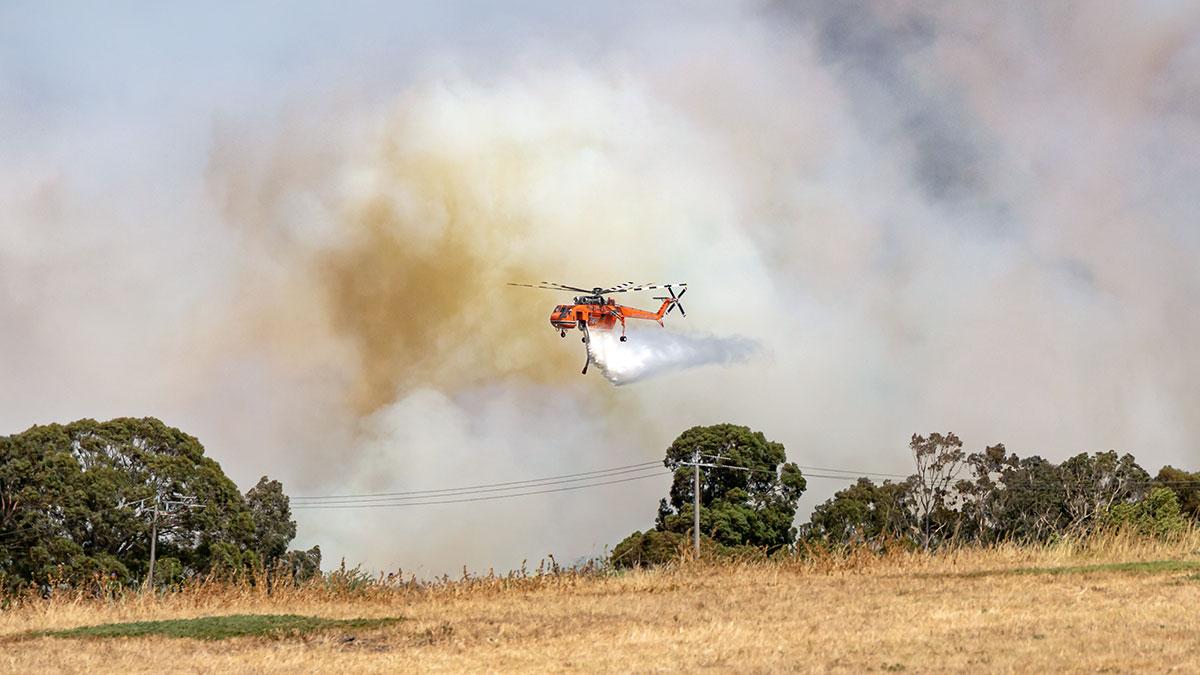 Strażackie 450 tysięcy na ratowanie australijskich zwierząt