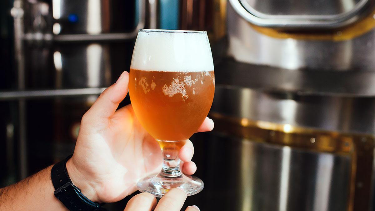 Piwo prosto z uczelni