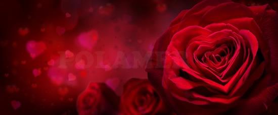 Walentykowe Kwiaty do Polski przez Polamer