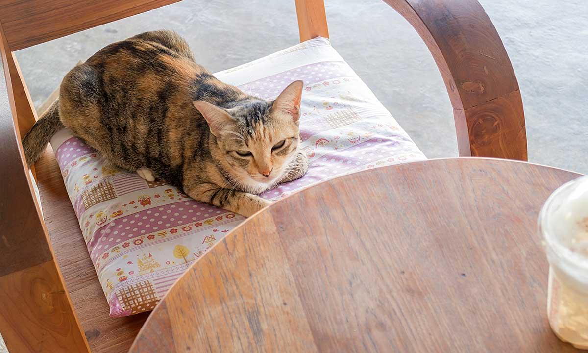 Domki dla kotów od develeperów