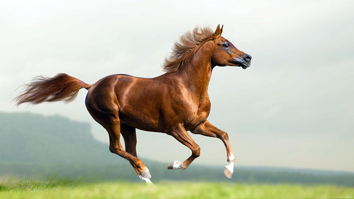 Kto chce adoptować konia?