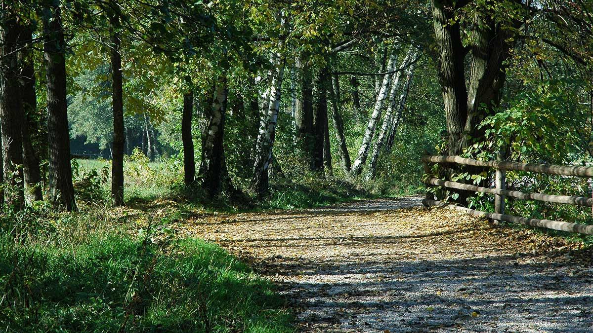 Ministerstwo Środowiska łamie prawo w sprawie Świętokrzyskiego Parku Narodowego