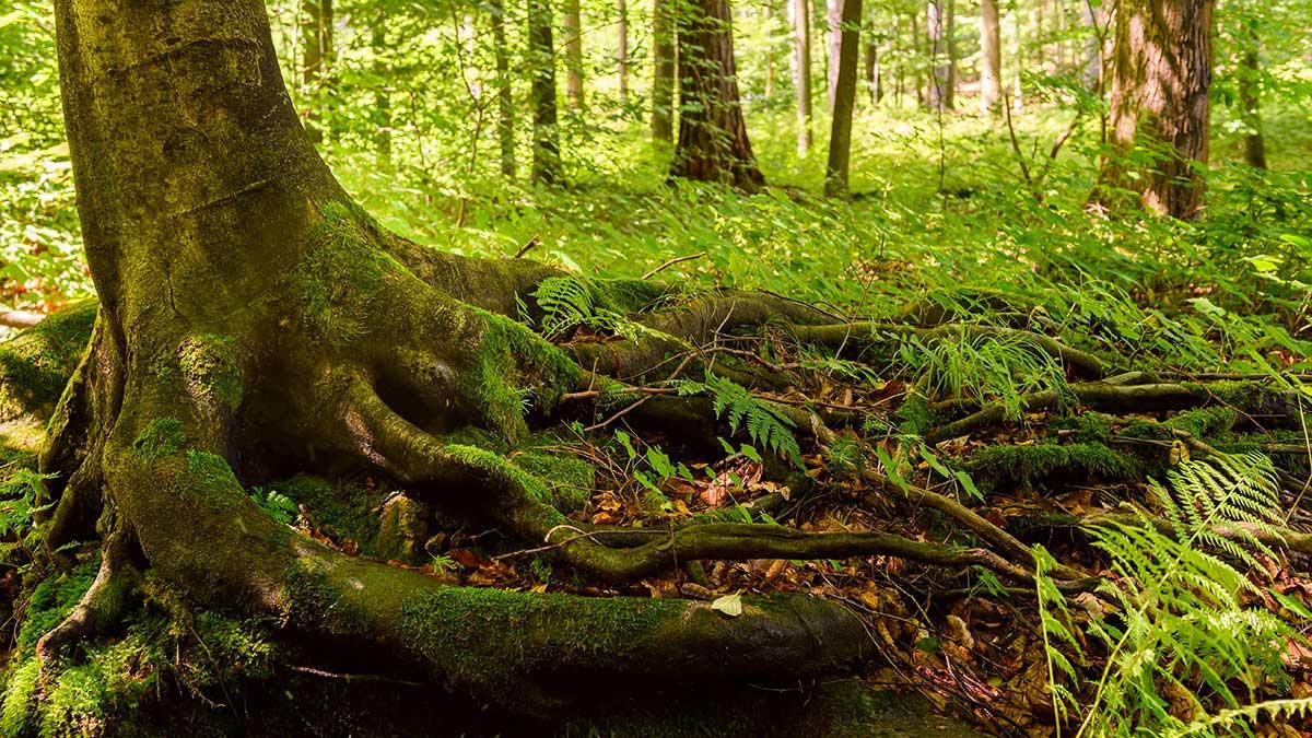 W Senacie ustawa, która ma na celu... niszczenie polskich lasów